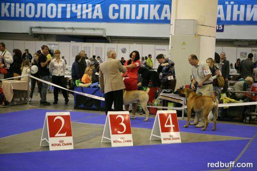 BENJAMIN BENEDIKT, 12 мес., ЛКЮ, CACIB-2014, Киев