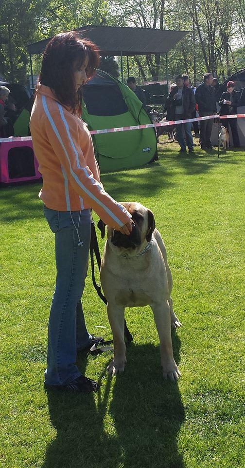 Fozzy TRB at National Dog Show Rybnik 2014 - I, CWC, BOS, BOB
