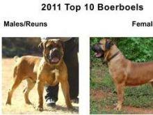 Десятка лучших ББ - 2011